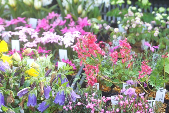 即売品の一例。きれいなお花も多数販売されます。