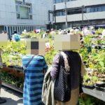 2021/5/14~ 「初夏の山野草と錦葉珍品即売会」開催のお知らせ。
